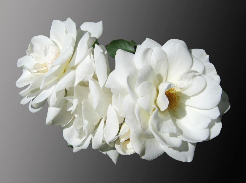 Vita blommor symbol för sorg..